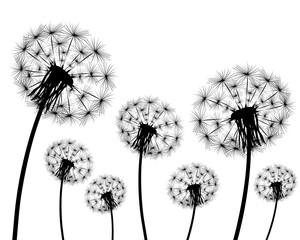 Silhouette of a dandelion © Pavel Mastepanov