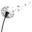 black silhouette of a dandelion - 159234069