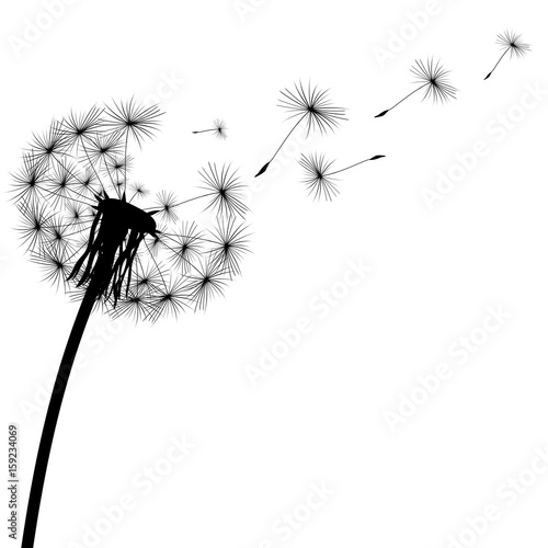 black silhouette of a dandelion