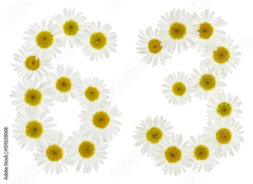 Poster Arabic numeral 63, sixty three, from white flowers of chamomile, isolated on whi