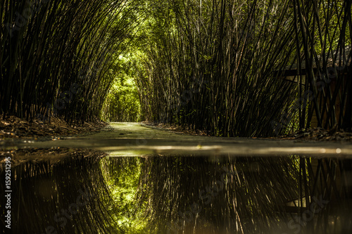 Fotobehang Bamboe Bamboo forest in Chengdu, China