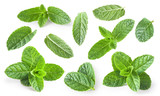 Mint leaves isolated on white background. - 159259281