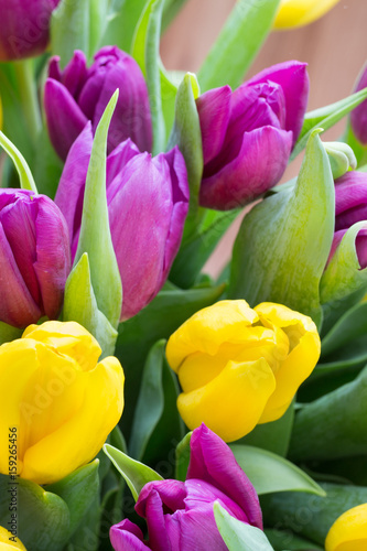 Purple and yellow tulip bouquet. More tulip on the grey background.