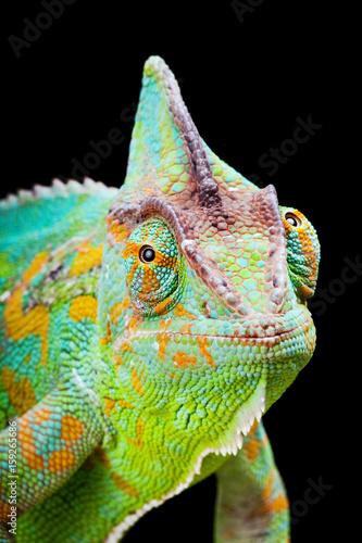 Fotobehang Kameleon Yemen Chameleon
