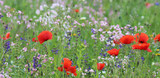 wildflower meadow with corn poppies - 159287667
