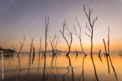 Dead tree by the lake with the beautiful evening sun. © WITTAYA