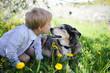 Young Child Kissing Pet German Shepherd Dog Outside in Flower Meadow