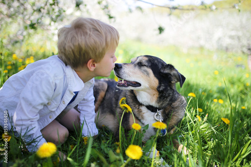 Young Child Kissing Pet German Shepherd Dog Outside in Flower Meadow Poster