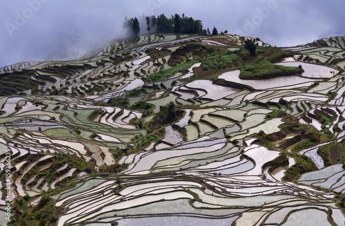 Fotobehang Rijstvelden Terraced rice fields in Yuanyang county, Yunnan, China