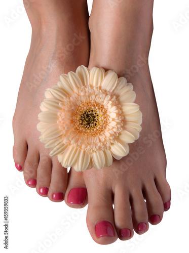 Fotobehang Gerbera Female feet with flowers on white background
