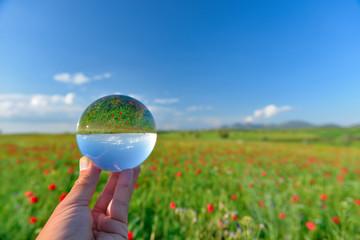 poppy field landscape in reverse