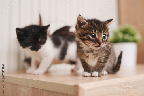 beautiful kitties on bright background Poster