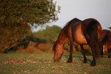 braunes Pferd auf einer Wiese
