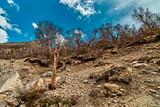 Nakied mountain trees in Himalaya mountains. Gaumukh, Gangotri, Uttarakhand, India.
