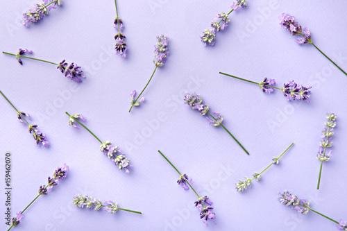 Lavender pattern. Purple flowers viewed from above on a violet background. Top view - 159462070