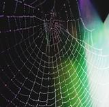 spiderweb - 159470623