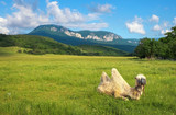 Beautifil landscape with camel in field and mountains.