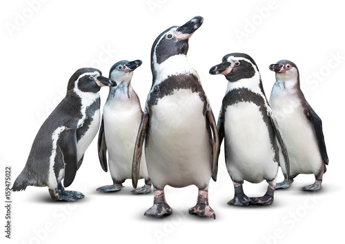 Plexiglas Antarctica Penguin isolated
