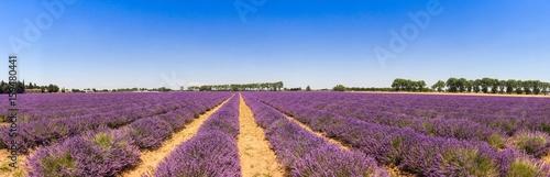 Keuken foto achterwand Lavendel Panorama d'un champ de lavande en Provence, France
