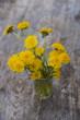 bouquet of dandelions - 159483482