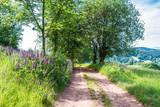 Droga przy łące w lecie