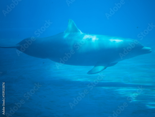beautiful dolhin in the water