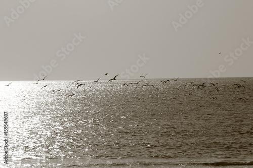 동해안 - 159549607