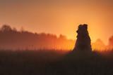 Cute dog on field with beautiful sunrise