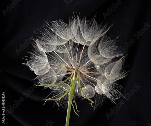 Fototapety, obrazy : flower