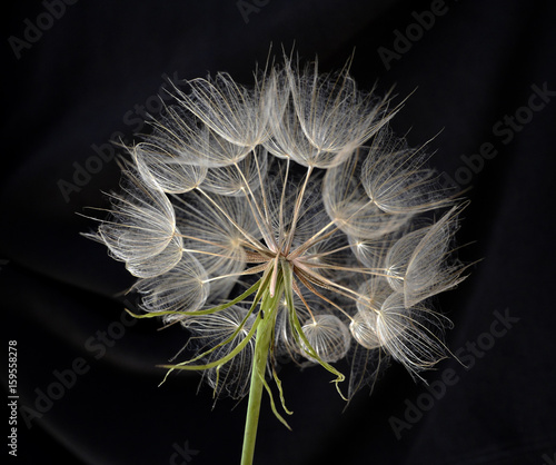 Zdjęcia na płótnie, fototapety na wymiar, obrazy na ścianę : flower