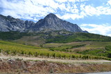 mountains with vineyards