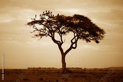 Foto op Plexiglas Bruin Amboseli national park