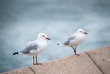 Seagull at Sydney Opera House
