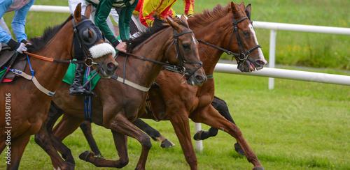 Running horses on the race track плакат