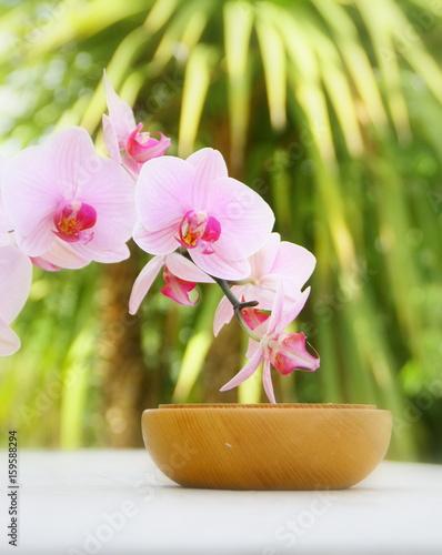 orchidée rose et bois,ambiance détente végétale