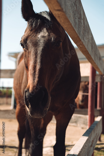 Horse standing outdoors. Looking aside. Poster