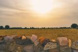 Wheat Farm Rural India