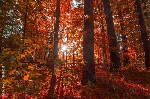 Foto op Plexiglas Rood paars fall