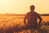 Farmer in ripe wheat field planning harvest activity - 159630275