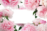 Pink peony flower on white background with copy space for greeting message.