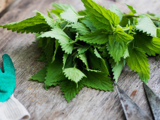 Fresh nettle on a wooden background