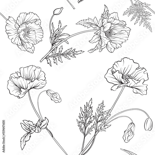 Seamless pattern with poppy flowers in botanical vintage style. Outline hand drawing coloring page for adult coloring book. Stock line vector illustration. - 159647600