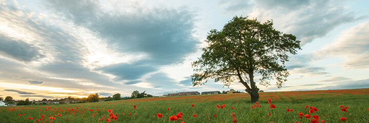 Tree in a field of poppies