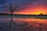 Landscape colorful sunset over lake with bright sky and lonely old tree