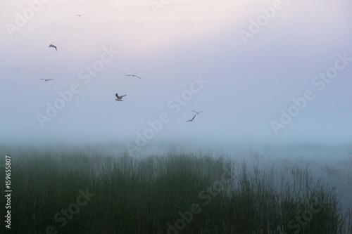 Ptaki we mgle