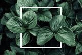Deep green leaves, creative layout with white frame, flat lay. Nature concept - 159656401