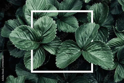 Foto op Canvas Natuur Deep green leaves, creative layout with white frame, flat lay. Nature concept
