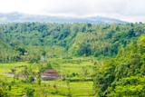 Rice terrace field near Rendang, Bali, Indonesia