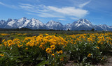 Wildflowers at Grand Tetons - 159664662