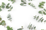 Baby eucalyptus leaves pattern on white background with copy space - 159678847